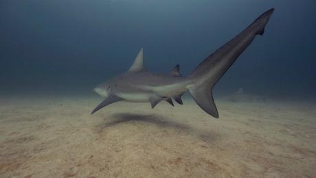 shark1-5343-1430901863.jpg