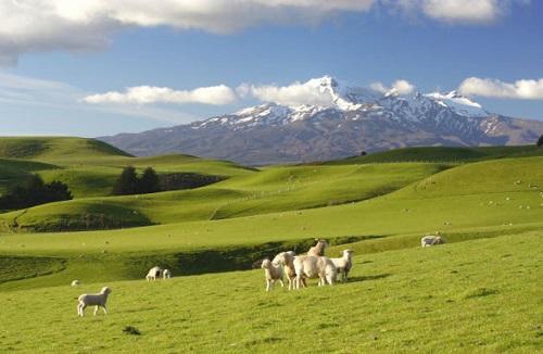New-Zealand-2b.jpg