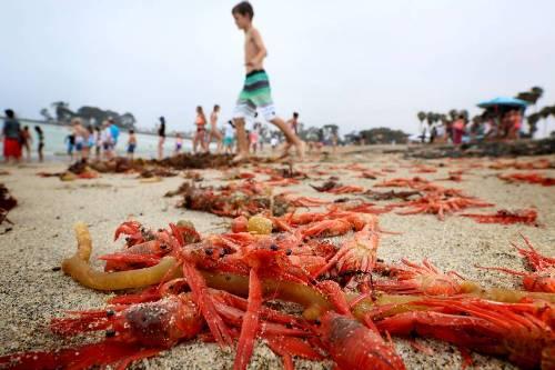 f-crabs-a-20150619-870x580-2235-14346790