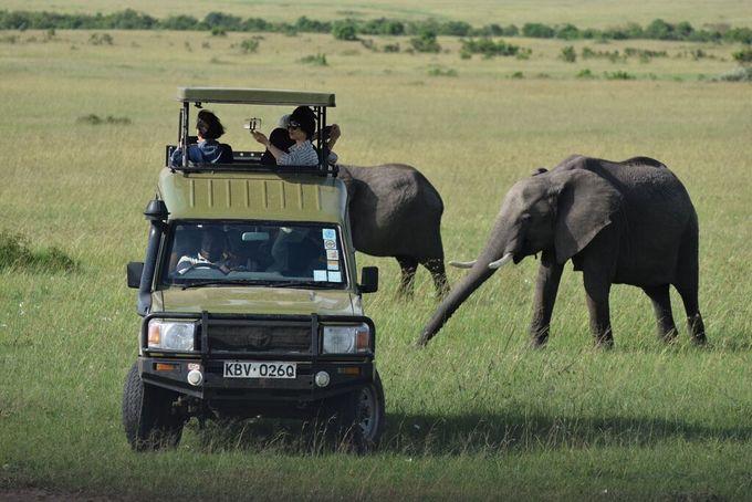 Thế giới động vật hoang dã ở Kenya