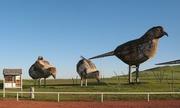Những chú chim khổng lồ bên cao tốc Mỹ