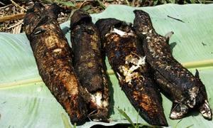 Cá lóc nướng trui và gỏi nhộng ong Cà Mau