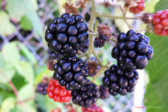 Thiên nhiên bốn mùa ở tiểu bang Washington