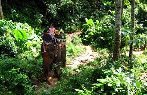 Voi ở Lào  Được biết đến là xứ sở triệu voi. Ở Lào, voi cũng được sử dụng để vận chuyển hàng hóa, chở khách du lịch tham quan. Ảnh : huffingtonpost