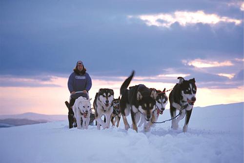 Chó kéo xe trượt tuyết ở Alaska  Nỗi ám ảnh của người Alaska chính là ngồi trên phương tiện này. Cuộc đua chó kéo xe trượt tuyết diễn ra vào tháng 3 hàng năm ở Alska với quảng đường đua khoảng 1.850 km từ Anchorage đến Nome. Anh : Whenonearth