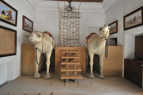 camelmuseum-1625-1438481183.jpg
