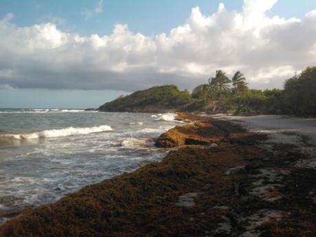 4628286-6-21b5-sur-la-plage-de-8814-9132