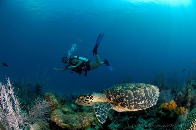 diving scuba cayman islands 1440494797 660x0 Sơn Đoòng đứng đầu điểm đến mới của thế kỷ 21