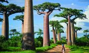 Loài cây kiêu ngạo ở Madagasca