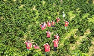 Hơn 300 bạn trẻ tham gia lễ hội mùa hè Đà Lạt