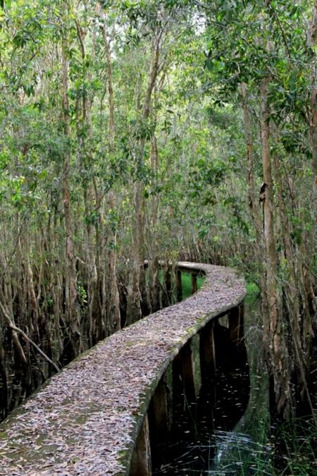 Con đường xuyên rừng tràm dài nhất Việt Nam