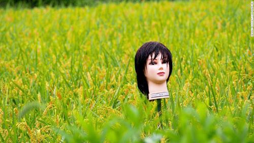150918121215-japan-scarecrow-4-3106-8497