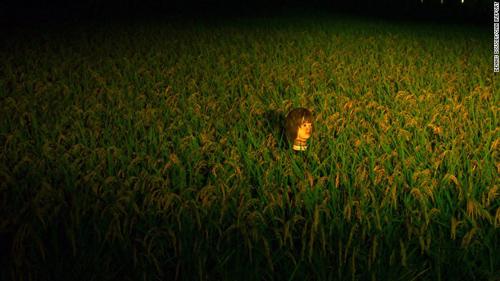 150918143329-japan-scarecrow-1-3721-5213
