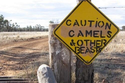 Đây là một tấm biển được đặt tại Charlotte Plains, thị trấn Cunnamulla, Tây Nam Queensland. Mọi loài động vật từ lớn đến nhỏ đều được nhắc đến trên biển báo này và những tài xế cần phải cảnh giác cao độ khi đi trên đoạn đường này.