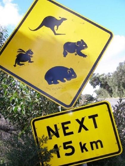 Công viên Cape Conran Coastal thuộc phía Đông Victoria là nơi sinh sống của nhiều loài động vật hoang dã kì lạ. Chúng sẽ quanh quẩn tại khu vực cắm trại của du khách bất cứ lúc nào vì vậy khách tới tham quan cần cảnh giác và tránh xa những con vật này.