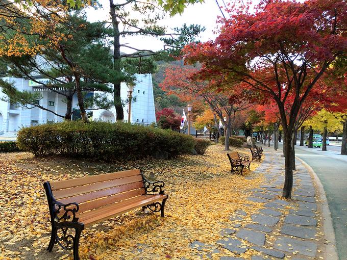 Bức tranh thu rực rỡ ở Hàn Quốc