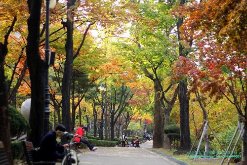 Những hàng cây với những tầng lá đầy màu sắc trong tiết trời thu tại công viên Songpa Naru. Ảnh: havehalalwilltravel