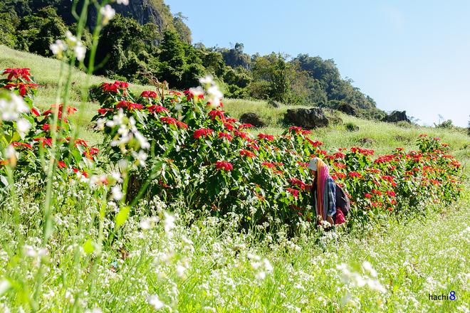 Những mùa hoa mời gọi dân phượt dịp cuối năm