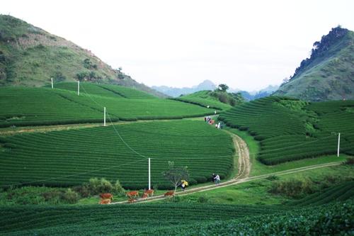 Du lịch Việt Nam đứng ở đâu trên thế giới