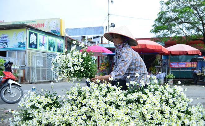 Cúc họa mi báo hiệu mùa đông Hà Nội