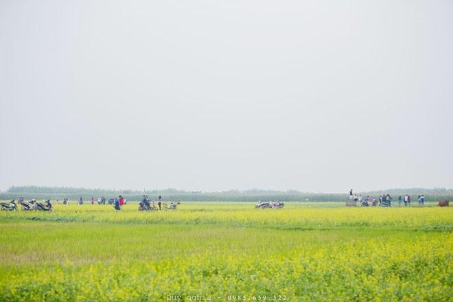 Cánh đồng hoa cải vàng rực rỡ ở Thái Bình