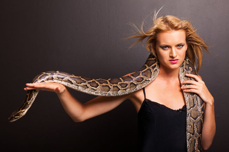 Ở thành phố Fredericton, tỉnh New Brunswick, bạn sẽ phạm luật khi khoác một con rắn, một con trăn hoặc một loài bò sát bạn nuôi như thú cưng trên vai ở nơi công cộng.