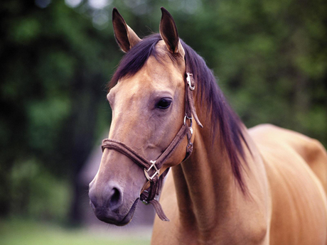 Province-wide, Ontario: If you dont pay your hotel bill, they can sell your horse.