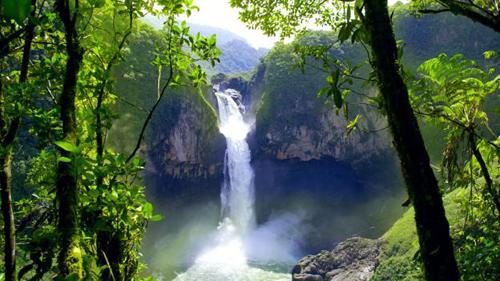 Rừng ecuador và bí ẩn về những cây cọ biết đi - 3