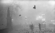 Hiểm họa sau màn sương mù London năm 1952