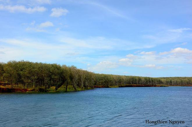 Tuyệt vời rừng cao su gia lai mùa thay lá - 3