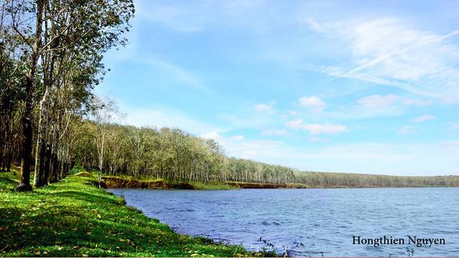 Tuyệt vời rừng cao su gia lai mùa thay lá - 7