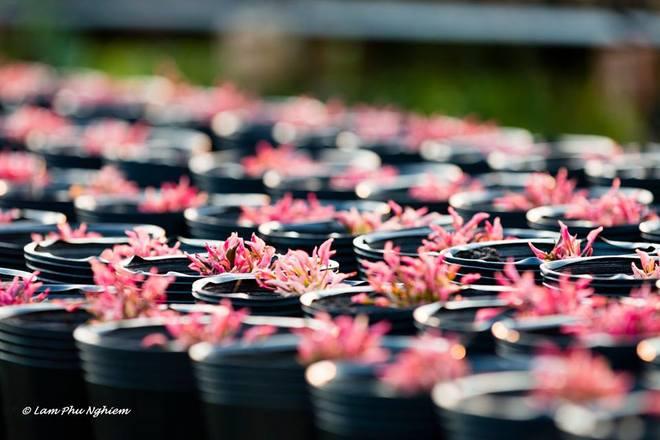 Muôn hoa Sa Đéc khoe sắc đón xuân về