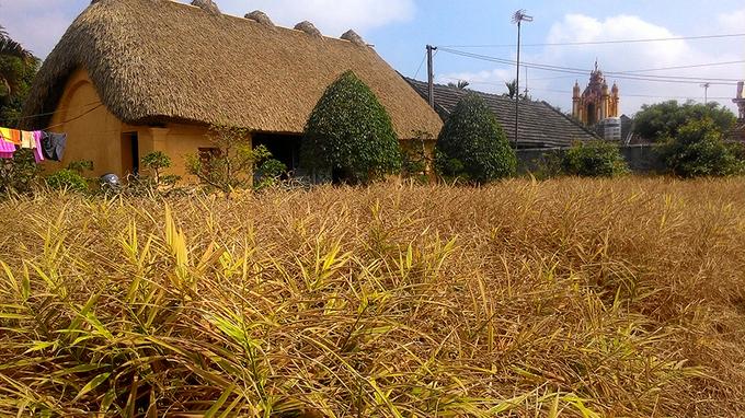 Những ngôi nhà mái rạ ở 'thủ phủ' gạo tám