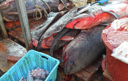 Ăn thịt cá mập bạn đã thử - 5