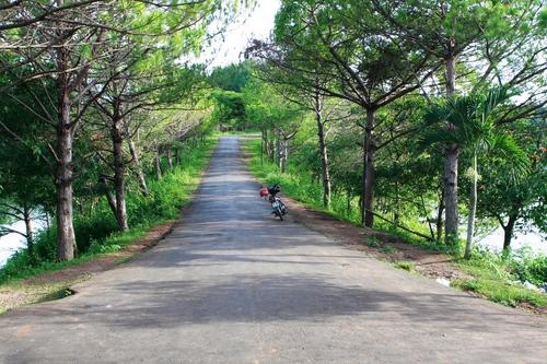 Đường vào Biển Hồ rợp trong bóng thông xanh mát. Ảnh: Lam Linh