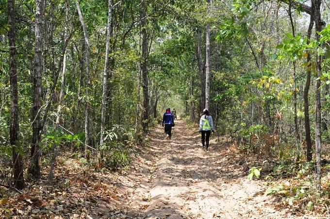 24h khám phá rừng Bưng Thị hoang sơ ở Bình Thuận