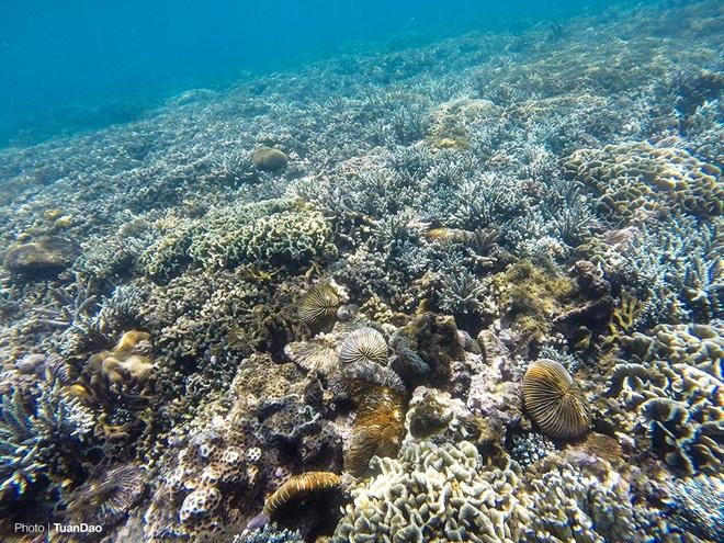 Thế giới san hô kỳ ảo dưới đáy vịnh Vĩnh Hy