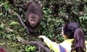 Khỉ cuỗm điện thoại của du khách vào rừng