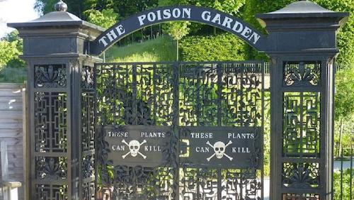 Alnwick được mệnh danh là khu vườn nguy hiểm nhất thế giới. Ảnh: Lauren McMah.