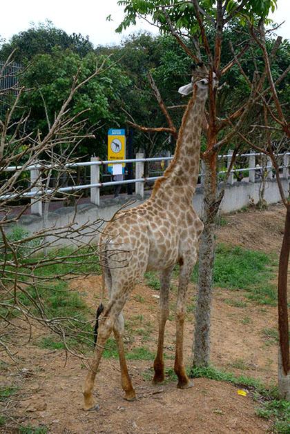 Vườn thú cách quốc lộ 1A khoảng 15 km.