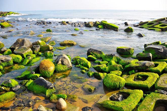 8 cảnh đẹp xứ 'hoa vàng cỏ xanh' làm nức lòng du khách