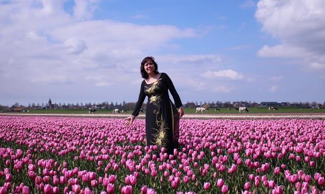 Cánh đồng hoa tulip đẹp như tranh ở Hà Lan