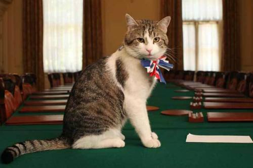 Thủ lĩnh săn chuột mèo Larry ngày bổ nhiệm. Ảnh: British Government.