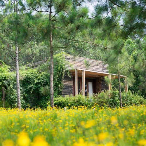 Không gian xanh của khu Hilltop Deluxe Villa.