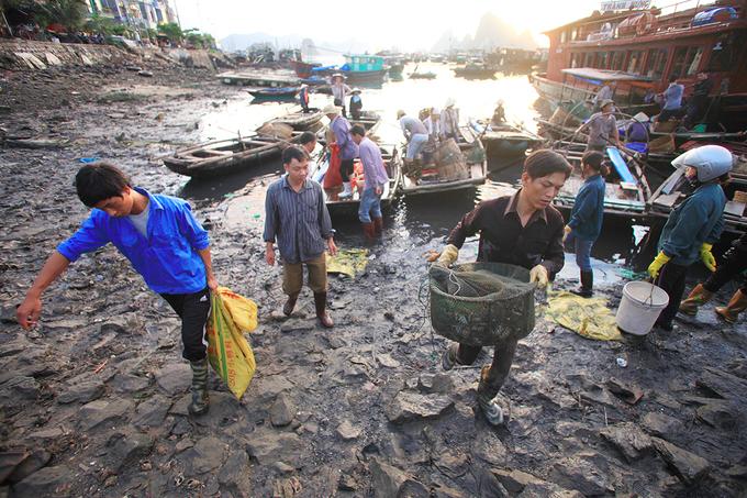 Chợ hải sản tấp nập trên cầu cảng ra đảo Cô Tô