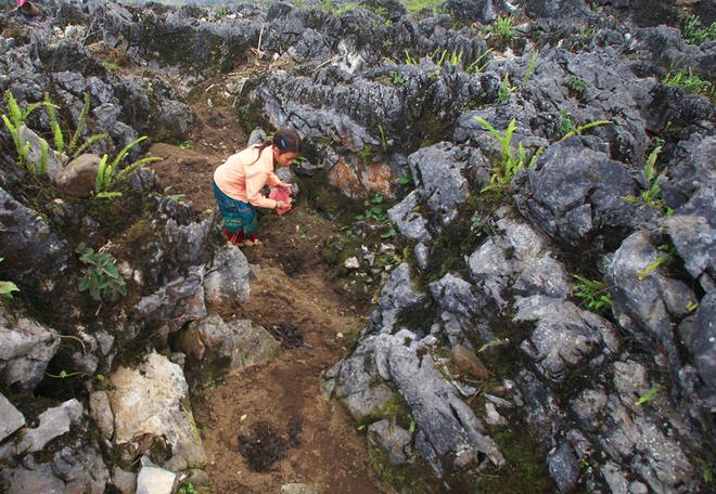 Sự sống nảy mầm từ những hốc đá Hà Giang