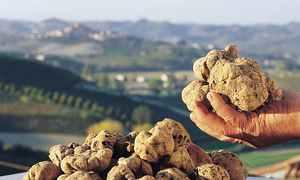 Nơi tìm ra loại nấm đắt nhất thế giới