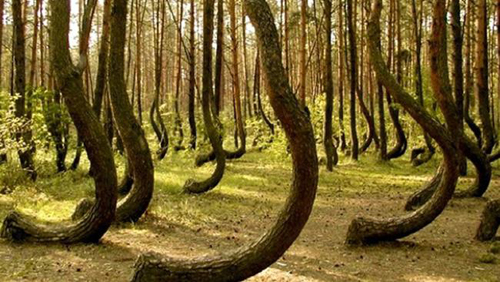 rung-ma-transylvania-tam-giac-quy-bermuda-tren-mat-dat