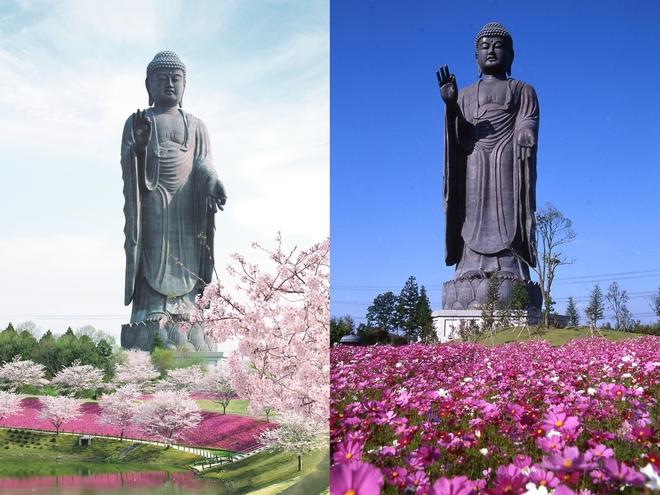 Ibaraki - một điểm đến ở Nhật đi 4 lần không chán