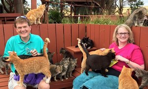 Thiên đường mèo ở Hawaii